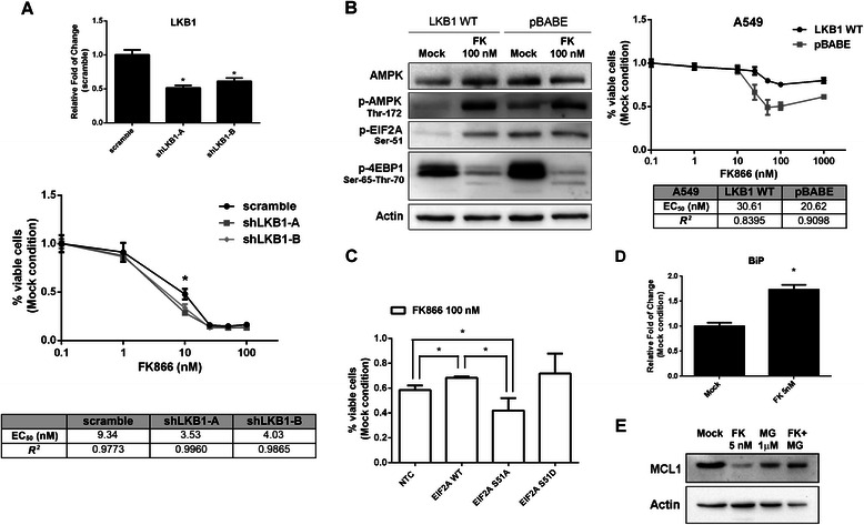 Protective role of EIF2A and FK866 induced UPR. a Expression level of LKB1 mRNA, evaluated in Jurkat cells after 120 h of lentiviral transduction with shRNAs expressing the control sequence (scramble) or two LKB1-silencing shRNAs (shLKB1- a and – b ), in the upper panel. Cells were transduced for 72 h and then treated with FK866 for 48 h. Viability was measured by MTT assay in comparison with Mock (DMSO) condition, in the lower panel. Mean and SD of a biological triplicate (*, p -value