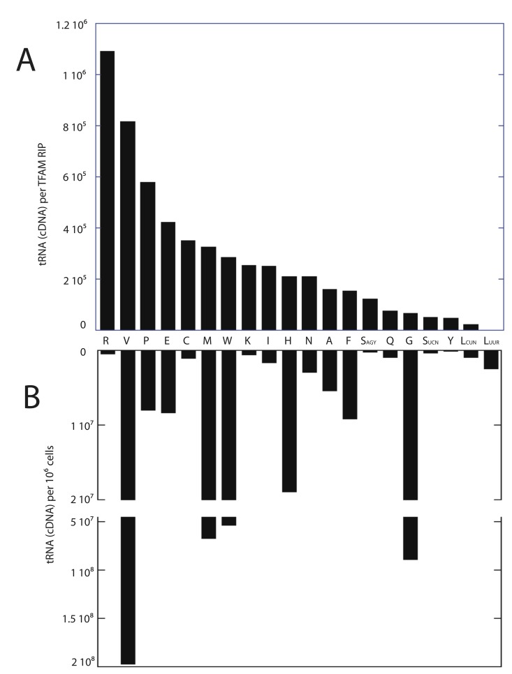 Relative levels of TFAM-immunoprecipitated and total cellular mitochondrial tRNAs determined by RT-PCR. (A) Ranked relative levels of mitochondrial tRNAs purified with TFAM in RNA immunoprecipitations. (B) Relative detectable levels of mitochondrial tRNAs obtained from 1x10 6 3T3sw cells.