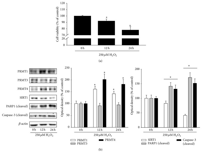 H 2 O 2 increases PRMT1 and PRMT4 expression but decreases SIRT1 expression. (a, b) ARPE-19 cells were treated with 250 μ M H 2 O 2 for 12 and 24 h. (a) Cell viability was measured by the MTT assay. The data represent the means ± SEM of three independent experiments, each performed in triplicate. ∗ P