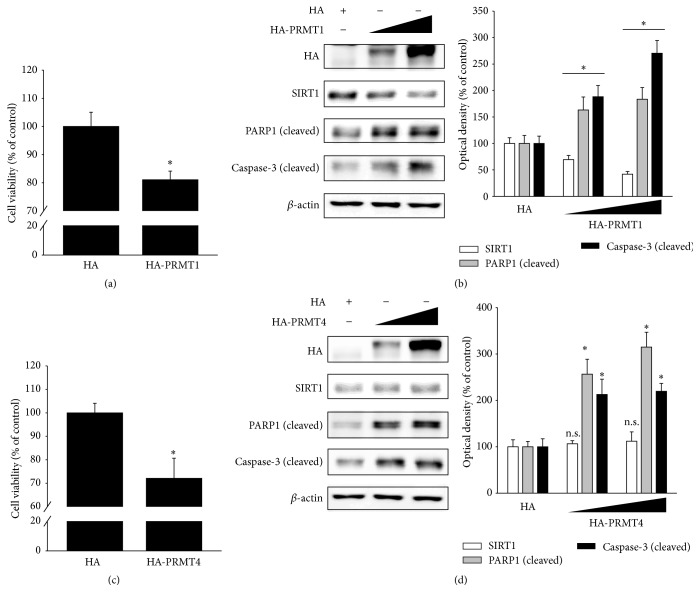 PRMT1 or PRMT4 overexpression increases RPE cell apoptosis, while PRMT1 overexpression decreases SIRT1 expression. (a, b) ARPE-19 cells were transfected with HA or HA-PRMT1 plasmid DNA. After 36 h, (a) cell viability was measured by the MTT assay. The data represent the means ± SEM of three independent experiments, each performed in triplicate. ∗ P