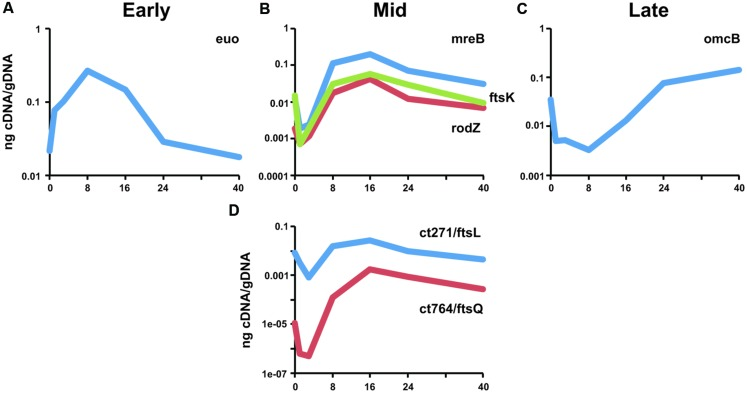 Transcriptional analysis of ct271/ftsL and ct764/ftsQ in Chlamydia . RNA was collected from infected cells at the indicated timepoints and assayed for transcripts by <t>RT-qPCR.</t> Transcript levels were normalized to genomic DNA (ng <t>cDNA/gDNA).</t> (A) Representative early stage ( euo ), (B) mid cycle division-related ( mreB, rodZ, ftsK ), and (C) late-stage ( omcB ) transcripts are shown for comparison. (D) ct271 and ct764 transcription are consistent with a mid-cycle profile. Data are representative of a minimum of two experiments. Standard deviations were typically less than 5% of the mean.