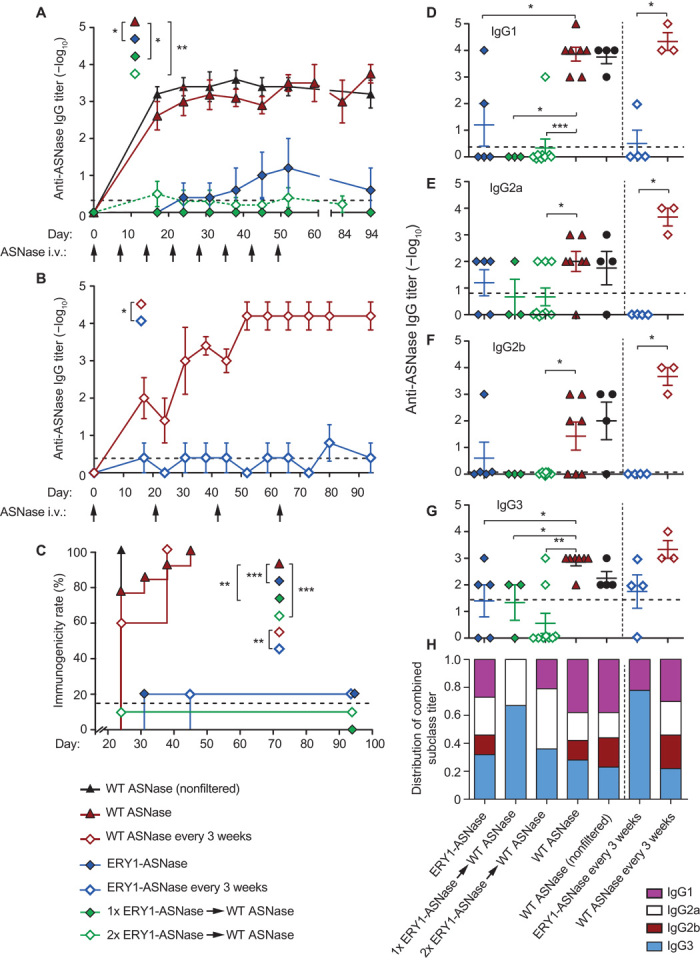 Erythrocyte-binding ASNase is nonimmunogenic and acts as a tolerogen that enables follow-on treatment with WT enzyme. ( A ) Time course of anti-ASNase IgG antibody development in plasma of mice administered with eight weekly 15-μg doses of either WT ASNase or ERY1-ASNase or with one or two tolerogenic doses of ERY1-ASNase followed by WT ASNase for the remaining doses (end-point IgG titers, Mann-Whitney U test: * P ≤ 0.05, ** P ≤ 0.01, *** P ≤ 0.001). ( B ) Time course of anti-ASNase IgG antibody development in plasma of mice administered a dose-sparing regimen of 15 μg of either WT ASNase or ERY1-ASNase every 3 weeks for a total of four doses (end-point IgG titers, Mann-Whitney U test: * P ≤ 0.05, ** P ≤ 0.01, *** P ≤ 0.001). ( C ) Immunogenicity incidence rates of the dosing regimens of ERY1-ASNase and WT ASNase (Mantel-Cox test: * P ≤ 0.05, ** P ≤ 0.01, *** P ≤ 0.001). ( D to G ) End-point plasma anti-ASNase antibody titers of subclass (D) IgG1, (E) IgG2a, (F) IgG2b, and (G) IgG3 (Mann-Whitney U test: * P ≤ 0.05, ** P ≤ 0.01, *** P ≤ 0.001). Initial dilutions were 100-fold for all samples; dotted lines indicate mean values for the naïve population ( n = 149); data are presented as means ± SEM ( n = 4 to 9 per group until 80 days; n = 3 to 9 from 80 days onward). ( H ) End-point IgG subclass profile, as calculated by normalization of the sum of all titers across subclasses ( n = 3 to 9).