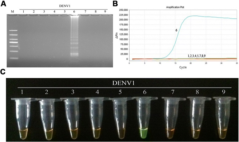Specificity of RT-LAMP assay for the detection of DENV1. a Agarose gel electrophoresis analysis of the DENV1 RT-LAMP amplification product, showing the specificity of the primers. b The real-time monitoring over time for the DENV1 RT-LAMP reaction. c Visual inspection of the RT-LAMP specificity assay with SYBR Green I corresponding to the agarose gel electrophoresis analysis. 1, negative [ 43 ]; 2–3, DNA of HSV and EBV, respectively; 4–9, RNA of JEV, YFV and DENV1-4, respectively; M, DL1000 DNA Marker