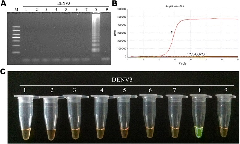 Specificity of RT-LAMP assay for the detection of DENV3. a Agarose gel electrophoresis analysis of the DENV3 RT-LAMP amplification product, showing the specificity of the primers. b The real-time monitoring over time for the DENV3 RT-LAMP reaction. c Visual inspection of the RT-LAMP specificity assay with <t>SYBR</t> Green I corresponding to the agarose gel electrophoresis analysis. 1, negative [ 43 ]; 2–3, DNA of HSV and EBV, respectively; 4–9, RNA of JEV, YFV and DENV1-4, respectively; M, DL1000 DNA Marker