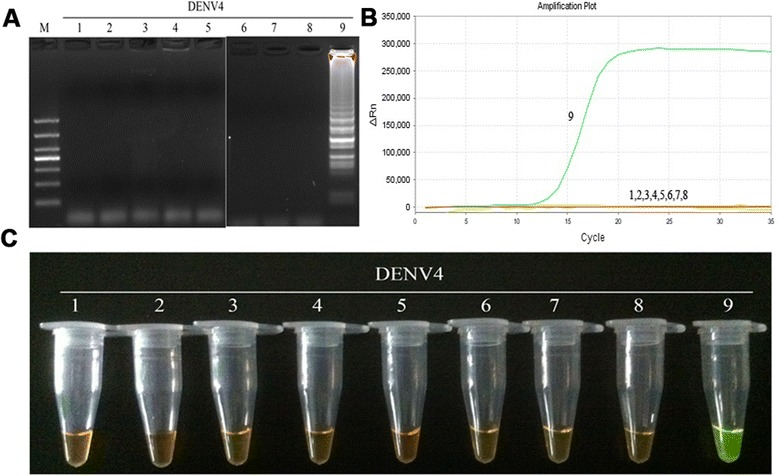 Specificity of RT-LAMP assay for the detection of DENV4. a Agarose gel electrophoresis analysis of the DENV4 RT-LAMP amplification product, showing the specificity of the primers. b The real-time monitoring over time for the DENV4 RT-LAMP reaction. c Visual inspection of the RT-LAMP specificity assay with SYBR Green I corresponding to the agarose gel electrophoresis analysis. 1, negative (water); 2–3, DNA of HSV and EBV, respectively; 4–9, RNA of JEV, YFV and DENV1-4, respectively; M, DL1000 DNA Marker