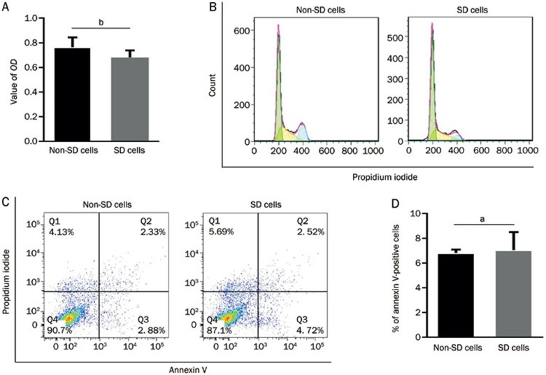 SD treatment resulted in significantly decreased proliferation and G 0 /G 1 state arrest without increased apoptosis in RPMI 8226 cells. RPMI 8226 cells were cultured with 10% FBS and 1% FBS (SD) for 24 h, and proliferation and apoptosis were analyzed using MTT and flow cytometry, respectively. (A) For the growth assays, MTT was used and the results were indicated. (B) Cell cycle was determined by FACS analysis of DNA fragmentation of propidium iodide-stained nuclei. SD resulted in increased RPMI 8226 cells at the G 0 /G 1 phase (50.75%±1.13% vs 62.23%±1.26%, P