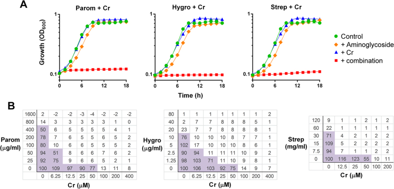 Aminoglycosides combined with chromate produce synergistic inhibition of yeast growth. ( A ) Growth of S. cerevisiae BY4743 was monitored continuously in YEPD broth supplemented as indicated. The agents and doses were: paromomycin (Parom), 200–250 μg ml −1 ; hygromycin B (Hygro), 10 μg ml −1 ; streptomycin (Strep), 30 mg ml −1 (the highest soluble dose attainable); chromate (Cr), 50 μM. Data shown are replicates from two independent cultures ± SEM where these are larger than the symbol dimensions. The data for each condition are representative of at least two independent experiments performed on different days. ( B ) Checkerboard assays with S. cerevisiae at the indicated concentrations, according to EUCAST procedure. The growth values within the boxes are percentages of control growth (OD) determined in the absence of aminoglycoside or Cr. Shaded boxes indicate ≥50% of control growth.