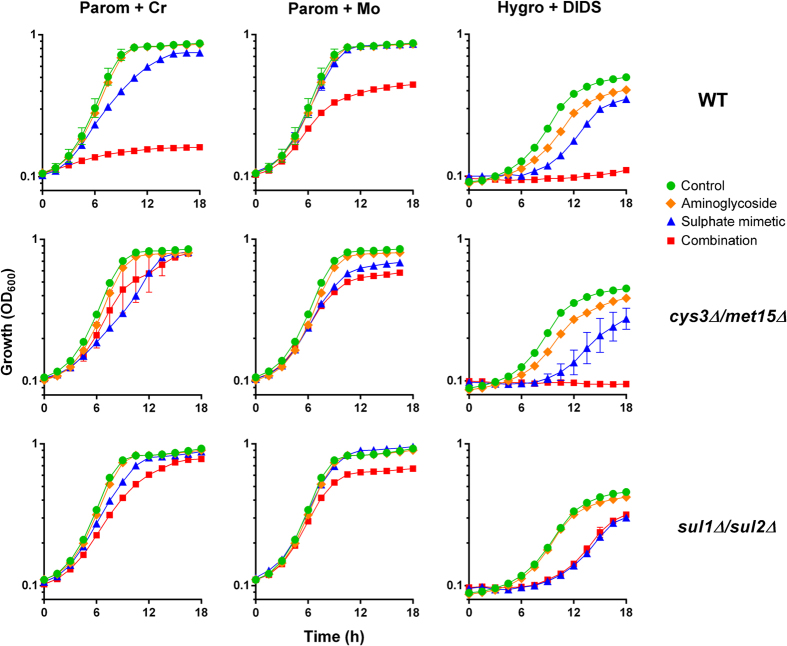 Synergy is suppressed in mutants resistant to sulphate-transport inhibition. Growth of wild type  S. cerevisiae  BY4741 or isogenic  cys3Δ/met15Δ  or  sul1Δ/sul2Δ  mutants was monitored continuously in YEPD or YNB (for Hygro+DIDS) broths. The appropriate doses of indicated agents used to test synergy were: 50μg ml −1  paromomycin for wild type and  cys3Δ/met15Δ , 300μg ml −1  paromomycin for  sul1Δ/sul2Δ , 150μg ml −1  hygromycin B, 50μM chromate, 1mM molybdate, 1 mM DIDS. Data shown are replicates from two independent cultures ± SEM where these are larger than the symbol dimensions. The data for each condition are representative of at least two independent experiments performed on different days.
