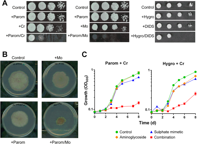 Synergistic growth inhibition of other problem fung i. ( A ) Growth of Z. bailii after spotting 10-fold serial dilutions of cell suspension on YEPD agar supplemented with 10 μg ml −1 paromomycin, 50 μM chromate and/or 1 mM molybdate, or to YNB agar with 10 μg ml −1 hygromycin B and/or 250 μM DIDS. ( B ) Growth of R. solani on PDA agar supplemented with 300 μg ml −1 paromomycin and 15 mM molybdate. ( C ) Growth of Z. tritici in PDB medium supplemented with 0.5 μg ml −1 paromomycin, 0.25 μg ml −1 hygromycin B and/or 10 μM chromate. The data for each condition are representative of at least two independent experiments performed on different days.