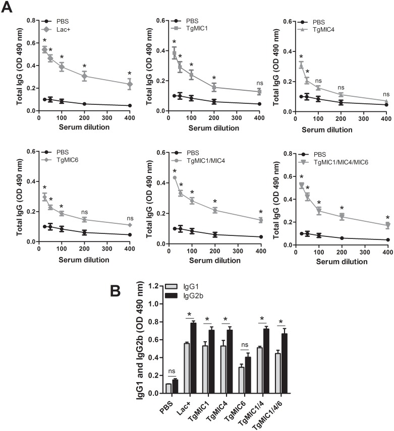 Specific humoral responses elicited by immunization of mice with microneme proteins. The reactivity of immunoglobulins anti-STAg was determined by ELISA in serum samples collected from both immunized (TgMICs) and control (PBS) mice 15 days after the last antigen injection. Each point/bar represents the average absorbance ± SD of the serum samples from 4 animals. (A) Absorbance provided by the reaction of serum <t>IgG</t> with STAg. (B) Absorbance provided by the reaction of serum <t>IgG1</t> and <t>IgG2a</t> (diluted 1:25) with STAg. The average absorbance ± SD generated by the reaction of serum IgG1 or IgG2a from each group of immunized mice was significantly higher than the corresponding values provided by control mice, with the exception of the TgMIC6-immunized group, whose results were not significantly different of those of the control group. Three independent experiments were performed, and data from one representative experiment is shown. Asterisks represent statistical significant differences (*p