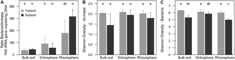 Relation of 16S rRNA copies between archaea and bacteria (A) and Shannon diversity index at 90% similarity level of archaea (B) and bacteria (C) in soil compartments of topsoil and subsoil . Different letters indicate significant differences ( P ≤ 0.05).