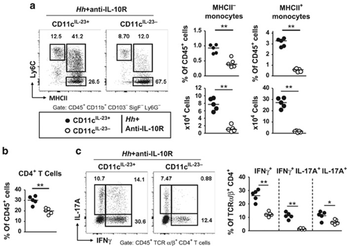 MHCII + monocytes and pathogenic T cells are reduced in Helicobacter hepaticus ( Hh )-infected and anti-IL-10R-treated CD11c IL-23- mice. CD11c IL-23+ and CD11c IL-23- mice were infected with Hh combined with anti-IL-10R monoclonal antibody (mAb) treatment and analyzed after 3 weeks. ( a ) Representative fluorescence-activated cell sorting (FACS) plots, frequencies among CD45 + leukocytes, and absolute numbers of the indicated myeloid subsets in the colonic lamina propria. ( b ) Frequencies of CD4 + T cells among CD45 + leukocytes. ( c ) Representative FACS plots and frequencies of IFNγ + , IFNγ + IL-17A + , and IL-17A + cells among CD4 + T cells upon restimulation with phorbol 12-myristate 13-acetate (PMA) and ionomycin. Data points represent individual mice, bars indicate medians. Data are representative of two independent experiments. * P