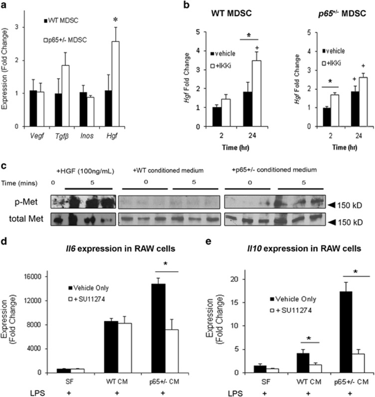 Reducing basal NF- <t>κ</t> B activity upregulates Hgf expression in <t>MDSCs.</t> ( a ) Real-time RT-PCR analysis revealed that Hgf was significantly upregulated in p65 +/− compared with WT MDSCs (* P