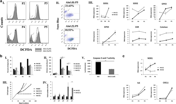 A specific NOX1 inhibitor reduces ROS accumulation and promotes long-term expansion of aASCs. Abdominal ASCs (Abd) were propagated under normoxic oxygen conditions (21% oxygen) in the presence of an NOX1-specific inhibitor ML171 (0, 0.5, 2.5 and 5 μ M). The following analyses were performed at the indicated passages (P). ( a I) ROS accumulation was evaluated by FACS (fluorescence-activated cell sorting) analysis using DCFDA staining, and the results of untreated aASCs compared with aASCs treated with 5 μ M inhibitor are shown. ( a II) Starting from P3, an additional population with a low DCFDA signal appeared (marked by an arrow). Dual staining of cells by DCFDA and aqua blue dye (an amine viability dye) was performed and analyzed by FACS. Results demonstrated that the majority of low DCFDA cells were aqua blue-positive dead cells. ( a III) RNA expression level of different antioxidant enzymes was compared between cells that were cultured with NOX1 inhibitor (gray line) or without it (black line). Error bars represent S.D. ( b I) The percent of dead cells was evaluated by aqua blue staining. The division rate of untreated aASCs was compared with aASCs that were treated with different concentrations of NOX1 inhibitor ( b II), and their long-term propagation of cells was evaluated ( b III). ( b IV) The number of cells of untreated aASCs and aASCs treated with 2.5 μ M NOX1 inhibitor was compared at the indicated passages in two independent experiments. ( b V) Activities of caspase-3/7 in untreated aASCs and aASCs treated with 2.5 μ M were measured by a Caspase-Glo 3/7 Assay Kit. Error bars represent S.E.M. (Student's two-tailed t -test for equal ( b II) or unequal ( b IV) variance). ** P