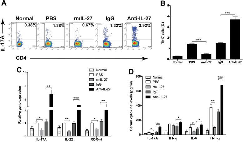 IL-27 ameliorates CVB3-induced myocarditis by inhibiting Th17 cells. a Representative FACS profile of Th17 cells in the spleen of CVB3 infection mice treated with rmIL-27 or Anti-IL-27 on day 7 post infection. Cells were gated on CD3 + CD4 + T cells. b Statistical analysis of the percentage of Th17 cells. c Expression of Th17 cells characteristic cytokines, IL-17A, IL-22, and key transcription factor ROR-γt in cardiac tissues on day 7 after CVB3 infection were detected by qRT-PCR. d The serum levels of proinflammatory cytokines IL-17A, IFN-γ, IL-6 and TNF-α in CVB3 infection mice were determined by ELISA. Normal, mice not-infected with the virus. Data are showed as the means ± SEM. * P
