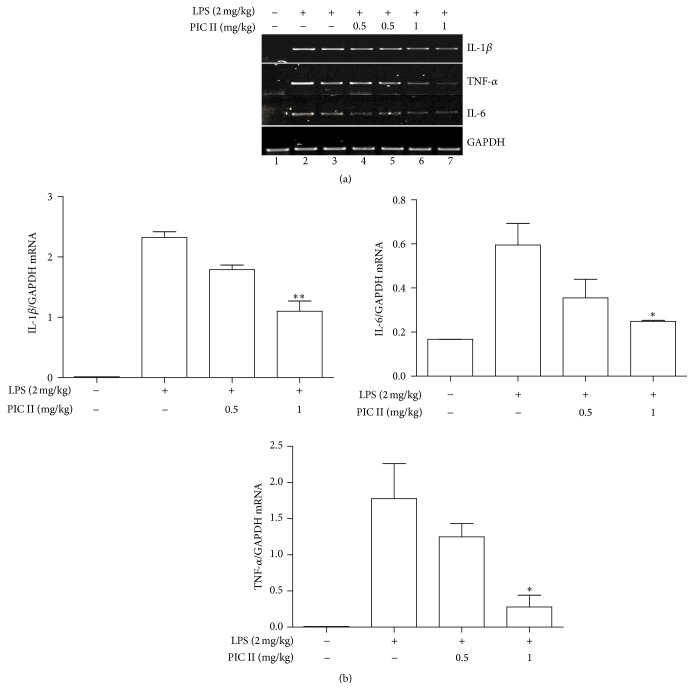 PIC II treatment decreases the expression of proinflammatory cytokine gene expression in the lungs of ALI mice. (a) Total RNA extracted from the lung tissues of ALI mice ( n = 5) was analyzed by semiquantitative RT-PCR for the expression of representative proinflammatory cytokine genes. Two representatives in each group are shown. (b) Each band was quantitated by ImageJ, and relative expressions of those cytokine genes were calculated over a house-keeping gene, GAPDH. Data represent the mean ± SEM of each group in three measurements. ∗ P and ∗∗ P were less than 0.05 and 0.001, respectively, compared with the only LPS treated.