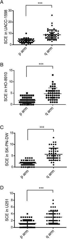 Location of SCE on the chromosome of each cell line. a – d . The numbers of SCEs on the p arm or the q arm of the chromosome are shown for the UACC-1598, HO-8910, SK-PN-DW, and U251 cells. Data are show as mean ± standard deviation (SD). *** indicate P