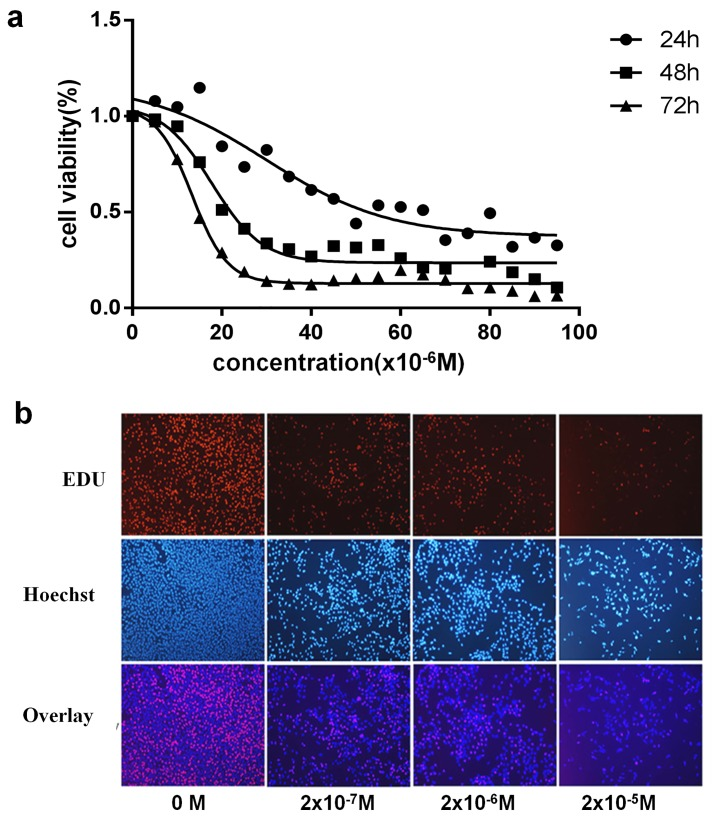 Effects of DES on GC-2 cell viability and proliferation. a. GC-2 cells were treated with 0~10 −4 M DES for 24, 48 or 72 h. Cell viability was measured by CCK8 assay. b. GC-2 cells were treated with the indicated concentrations of DES for 48 h. The fluorescent thymidine analog EdU was used to identify GC-2 cells by the labeling of their DNA. Hoechst-labeled nuclei was shown in blue, and EdU-labeled newborn cells were shown in red.