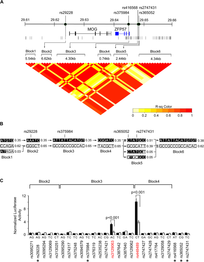 Mapping of regulatory elements to ZFP57 expression. ( A ) Linkage disequilibrium (LD) plot for region chr6:29.61 – 26.66(Mb) based on the r 2 calculation of 163 A2-B46-DR9 intra-CEH variants/SNPs in 105 unrelated Southern Han Chinese individuals (1000 Genome Project). LD block is defined as a block of SNPs with all pairwise r 2 value > 0.8. (B) Haplotypes found in each LD block. Population haplotype frequency is shown at the side of each haplotype. Connecting lines between blocks indicate crossover to the next block. Block in black indicates allele of variant associated with ZFP57 expression while white indicates allele associated with non ZFP57 expression. (C) Luciferase activity for alleles of each intra-CEH variants in LD blocks 2 to 4. Reporter plasmids carrying the fragment sequence of each unique allele of a certain variant were co-transfected with Renilla control vector into HT1080 cells. The luciferase activity readout was normalized to Renilla luciferase activity and the representative results from three independent experiments are shown. Variants with significant differential allelic luciferase activity (P