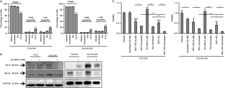 Glucocorticoid receptor (GR) antagonism downregulates the expression of antiapoptotic Bcl-2 and Bcl-xL proteins. (A) Docetaxel-resistant cells undergo apoptosis upon treatment with RU-486 (3 μM) and docetaxel (30 nM). *** P