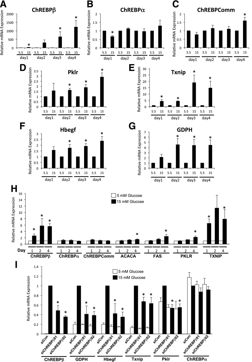 Glucose induces ChREBPβ in primary rat and human islet cells. A – G : Dispersed rat islet cells were incubated in media containing 5.5 or 15 mmol/L glucose for 1 to 4 days, and the expression of the indicated genes were determined and shown as fold change relative to each day after normalizing to β-actin using the ΔΔCT method. H : Isolated human islet cells were cultured in media containing 5.5 or 15 mmol/L glucose for 1, 2, or 4 days. Total RNA was isolated and subjected to RT-PCR using primers specific for the indicated genes. The data are expressed as a fold change from 5.5 mmol/L glucose. I : Rat islets were isolated, dispersed, and incubated with lipid-conjugated Accell siRNA for 4 days. Total RNA was isolated and subjected to RT-PCR. Data are presented as relative to the scramble control (SiCon) 15 mmol/L treatment, after normalization to β-actin using the ΔΔCT method. Error bars are the SEM ( n = 3–4 for rat islets, n = 5–9 for human islets). ChREBPComm, ChREBP-common; siChREBPβ01 and -02, siRNAs directed against ChREBPβ. * P