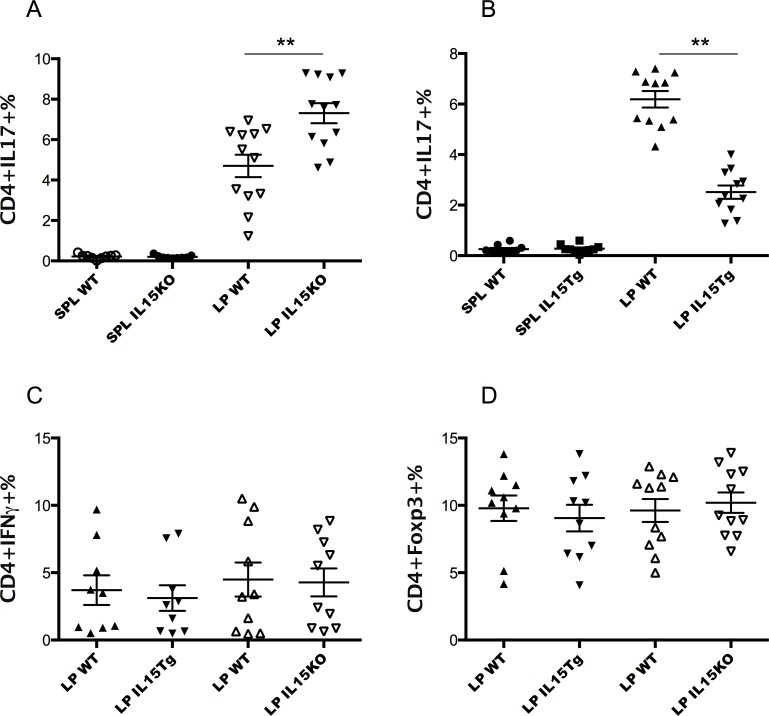 Differences in Th17 cell frequencies in the LP of IL-15 Tg or KO mice, but not in frequencies of Th1 or Treg cells. Cells from spleen and small intestine LP were stimulated for four hours with PMA and ionomycin and stained with surface markers CD3 and <t>CD4,</t> followed by intracellular staining of IL-17, IFNγ or Foxp3. A. Higher frequencies of Th17 cells were found in the LP of IL-15 KO mice than matched co-caged WT mice (p