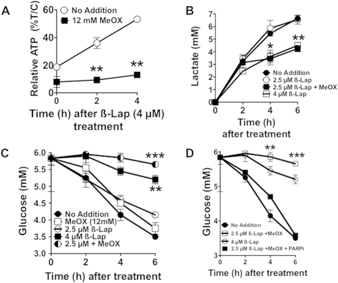 Methoxyamine potentiates ß-lap-induced PARP1-dependent metabolic catastrophe. ( A ) Relative ATP recovery in MiaPaca2 cells after a 2 h treatment with or without ß-lap, ±12 mM MeOX assessed over a 4 h time period by CellTiter-Glo assays. ( B , C ) Time-course of lactate production and glucose consumption over a 6 h period in media of MiaPaca2 cells after a 2 h treatment with ß-lap, ±12 mM MeOX. ( D ) Glucose consumption assessments from media of MiaPaca2 cells treated with Rucaparib (25 μM) for 2 h and then exposed to ß-lap ±12 mM MeOX for 2 h. Data represent means ±SEM from triplicate samples. All results were compared using Student's t-tests (+/− standard deviation) unless otherwise stated. *p