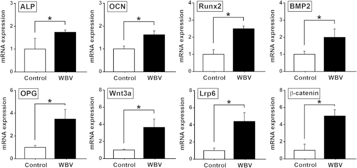 Effects of mechanical vibration stimulation on in vitro osteogenesis-related gene expression for primary rabbit osteoblasts seeded in pTi via qRT-PCR analyses, including ALP, OCN, Runx2, BMP2, OPG, <t>Wnt3a,</t> Lrp6 and β-catenin. Values are all expressed as mean ± S.D. ( n = 4), and the relative expression level of each gene was normalized to β-Actin. * Significant difference from the Control group with P