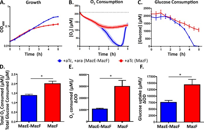 Quantification of oxygen and glucose consumption in MazF model persisters. E. coli MO:: mazE - mazF was grown to exponential phase before being washed and diluted in Gutnick with 2 mM glucose supplemented with aTc for MazF accumulation (red lines) or aTc with Ara for MazE-MazF coexpression (blue lines) at 0 h. (A) Growth of E. coli accumulating MazF or both MazE and MazF in the bioreactor where oxygen measurements were performed. (B) Oxygen consumption of cells accumulating MazF or expressing MazE-MazF measured over 5 h following inoculation in the bioreactor. The equilibrium oxygen concentration of the medium was 210 µM (dashed line). Cells undergoing MazF-mediated growth inhibition continued to consume oxygen, as illustrated by the concentration of dissolved oxygen in the growth medium remaining below 210 µM. (C) Glucose consumption of cells accumulating MazF or MazE-MazF. In the MazF samples, glucose consumption continued during growth inhibition. In the MazE-MazF sample, glucose exhaustion occurred around 4.5 h, and the cessation of glucose consumption coincided with an increase in dissolved oxygen in the growth medium. (D) Oxygen consumed per glucose consumed was calculated using data points from 2.5 to 5 h. Cells accumulating MazF consumed ~50% more oxygen per glucose compared with the MazE-MazF coexpression control. (E) Oxygen consumed relative to biomass produced was calculated using data points from 2.5 to 5 h, and it was 2.8-fold higher in MazF-inhibited cells than in cells expressing MazE-MazF. (F) Glucose consumed relative to biomass produced (calculated using data points from 2.5 to 5 h) was 1.9-fold higher than that of the coexpression control. *, P ≤ 0.05.