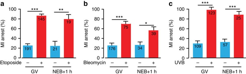 DNA damage following NEB causes MI arrest. ( a – c ) MI-arrest rates in oocytes that followed DNA damage induction either during GV arrest or 1 h after NEB; ( a ) etoposide addition (25 μg ml −1 ), ( b ) bleomycin (1 μM); and ( c ) ultraviolet B exposure (300 nm, 30 s). Numbers of oocytes used are as indicated (pooled from between 2 and 6 mice per treatment); ( a , b ) compared against vehicle addition; ( c ) no exposure. * P