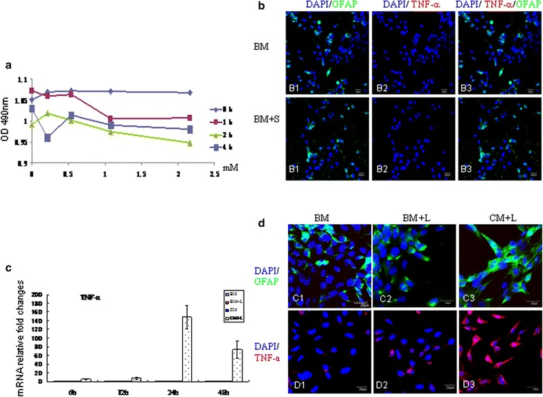 Cell viability assay of TNC1 astrocytes ( a ): scutellarin (in the range of 0.2–2.0 mM) incubated for different duration did not result in any significant cell death. Treatment of TNC1 with scutellarin ( b ): scutellarin at 0.54 mM did not elicit a noticeable reaction in TNC1 whose GFAP/TNF-α ( B1 – 3 ) expression remained comparable to cells in the control in basic medium (BM) ( A1 – 3 ). BM + S, basic medium + scutellarin. Microglia mediate TNC1 astrocyte reaction ( c ): TNF-α mRNA expression in TNC1 astrocytes remained relatively unchanged at all time-points following treatment with BM, BM + L and BV-2 conditioned medium (CM). However, in TNC1 incubated CM + L for various time points, TNC1 showed a remarkable increase in TNF-α peaking at 24 h. Confocal images in d showing GFAP ( C1 – 3 ), and TNF-α ( D1 – 3 ) expression in TNC1 astrocytes incubated with different medium for 24 h. Compared with cells incubated in BM and BM + LPS (BM + L), TNC1 astrocytes incubated with LPS-stimulated BV-2 cell conditioned medium (CM + L) ( C3 , D3 ) are hypertrophic and exhibit a marked increase in GFAP and TNF-α immunofluorescence. Scale bars 20 μm
