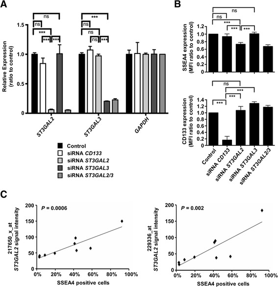 Sialyl-glycolipid stage-specific embryonic antigen 4 (SSEA4) expression is regulated by CMP- N -acetylneuraminate-β-galactosamide-α-2,3-sialyltransferase 2 ( ST3GAL2 ). a Small interfering <t>RNA</t> (siRNA)–mediated knockdown of ST3GAL2 and ST3GAL3 significantly reduced the expression of their respective target messenger RNAs (mRNAs), but not the housekeeping gene GAPDH , as measured by quantitative real-time polymerase chain reaction. Each bar represents the expression intensity normalized to the Lipofectamine reagent (Life Technologies, Carlsbad, CA, USA)-only control. b Knockdown of ST3GAL2 significantly reduced the expression of SSEA4, whereas targeting of CD133 or the close paralog ST3GAL3 did not result in a significant change of SSEA4 expression. Knockdown of CD133 expression by the respective siRNA was used as a positive control of direct targeting. Each bar represents the mean fluorescence intensity (MFI) normalized to the Lipofectamine-only control. c Expression of ST3GAL2 <t>mRNA</t> was measured by two Affymetrix® (Affymetrix, Santa Clara, CA, USA) probes, 217650_x_at and 229336_at, in nine tumor models and plotted against the frequency of SSEA4-positive cells as measured by flow cytometry in the respective models, which showed a significant positive correlation. *** p