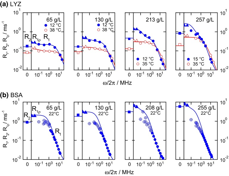 Dispersion profiles of ( a ) LYZ and ( b ) BSA at different concentrations. For direct visual comparison of R 1ρ ( triangles ) and R 1 ( circles ), R 1ρ data were multiplied by 10/3 (see ESM, Eqs. S1–S5). R 2 's ( squares ) were measured at 20 MHz and are shown in a separate column of each plot. Solid lines provide the best fit result. Uncertain data points (BSA at ω 0 /2π