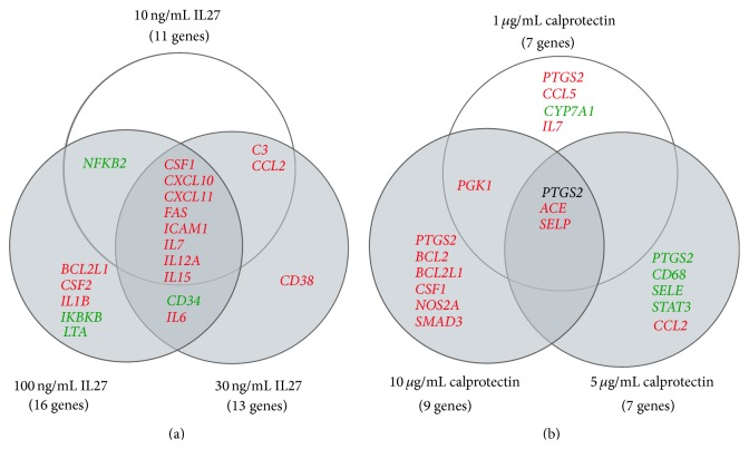 Venn diagrams on IL27- and calprotectin-stimulated HUVECs including significant regulated genes with p value p