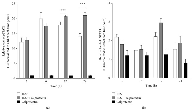 Effects of IL27, calprotectin, and IL27 + calprotectin cotreatment on STAT1/3 phosphorylation. Relative protein levels of Tyr701-phosphorylated pSTAT1 (a) and Tyr705-pSTAT3 (b) in IL27 (30 ng/mL) ± calprotectin (1 μ g/mL)-stimulated HUVECs for 3, 6, 12, and 24 h performed by western blot. Values are represented as mean ± SEM. Normalization was performed against tubulin. Presented statistical significances are between IL27 and IL27 + calprotectin and the indicated p values correspond to ∗∗∗ p