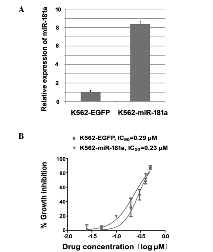 Overexpression of miR-181a in chronic myeloid leukemia K562 cells enhanced the chemotherapeutic sensitivity of these cells to the drug imatinib. (A) The overexpression of miR-181a in K562 cells infected with a lentivirus carrying the miR-181a gene was confirmed by reverse transcription-quantitative polymerase chain reaction analysis. K562 cells infected with a lentivirus carrying EGFP were used as negative control. (B) The overexpression of miR-181a in the K562 cells enhanced the inhibitory effect of the chemotherapeutic drug imatinib on the viability of these cells (P