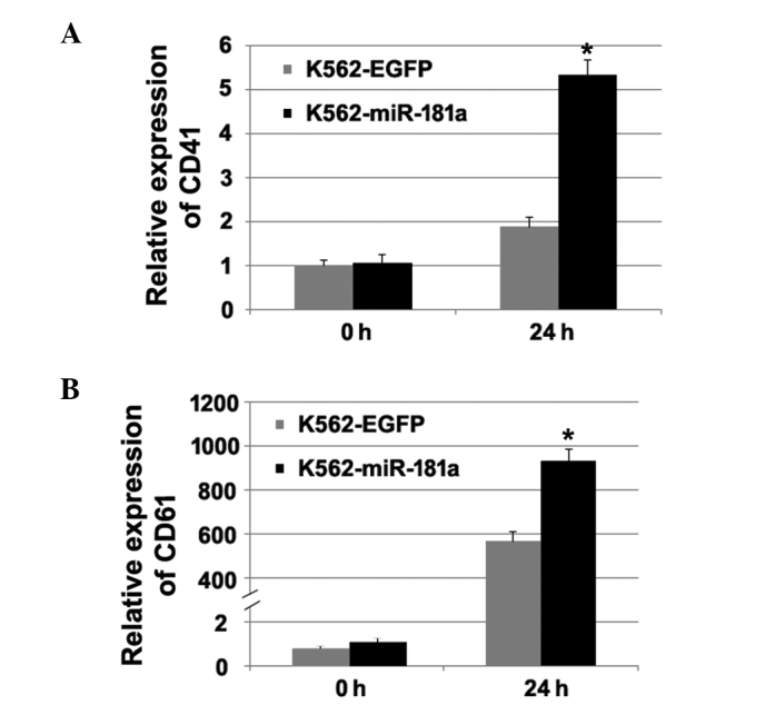 Overexpression of miR-181a promotes the megakaryocytic differentiation of chronic myeloid leukemia K562 cells. The overexpression of miR-181a induced the expression of (A) CD41 and (B) CD61 in the K562-miR-181a cells (*P