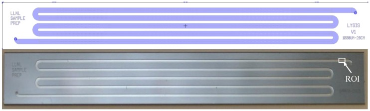 """Silicon and glass microfluidic lysis chip—layout in Tanner L-edit software ( top ) and finished device ( bottom ). The top device has a 1 mm wide channel and the bottom device an 0.5 mm wide channel. The external chip dimensions are 70.5 mm × 9 mm × 1 mm. The rectangle marked """"ROI"""" denotes the imaging area used for the BacLight live:dead membrane permeabilization assay (see Section 2.6 )."""
