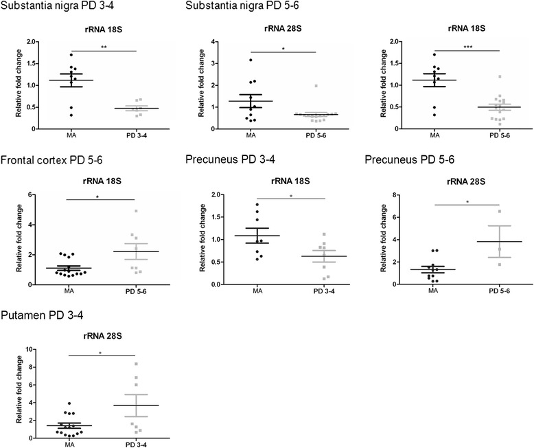 Altered expression levels of rRNA28S and rRNA18S in substantia nigra, frontal cortex area 8, angular gyrus, precuneus, and putamen in middle-aged (MA) and PD as determined by TaqMan PCR assays using GUS-β for normalization. Student's t test * p