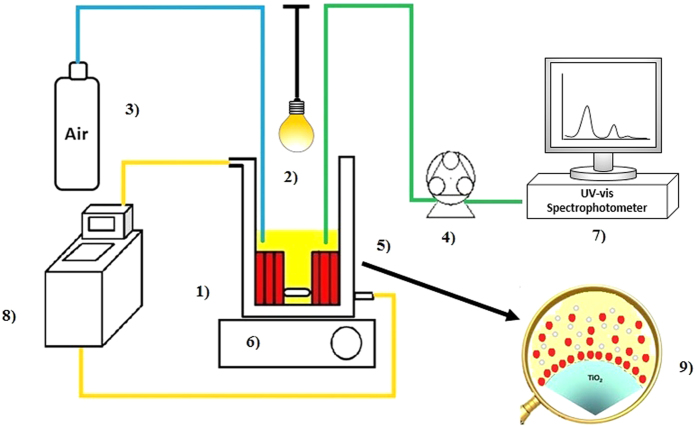 Scheme of photoreactor. (1) cylindrical thermostated glass vessel; (2) visible lamp; (3) air flux; (4) peristaltic pump <t>Gilson</t> miniplus 3; (5) support coated TiO 2 ; (6) magnetic stirred; (7) UV-Vis spectrophotometer; (8) thermostat; 9) magnification of TiO 2 -dye interaction.