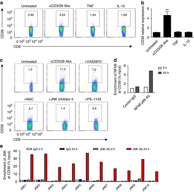 CD39 expression in CD8 + T cells is JNK and NFκB dependent. ( a , b ) Healthy blood CD8 + T cells were treated with anti-CD3 (10 μg ml −1 , precoated) and anti-CD28 (5 μg ml −1 , soluble) antibodies, or 10 ng ml −1 of the cytokines: either TNF or IL-12. CD39 expression was then determined by flow cytometry at 24 h ( a ) ( n =4) or by quantitative PCR at 2 h ( b ) ( n =4). ( c ) Healthy blood CD8 + T cells were stimulated with anti-CD3/CD28 antibodies in the presence or absence of VAS2870 (10 μM), NAC (10 mM), JNK inhibitor II (10 μM), PS-1145 (10 μM) for 72 h. CD39 expression was then analysed by fluorescence-activated cell sorting ( n =3). ( d , e ) Chromatin immunoprecipitation analyses indicating enrichment of NFκB p65 ( d ) or JNK/c-Jun ( e ) at the CD39 promoter region in CD8 + T cells fresh isolated (fresh) or activated with anti-CD3/28 antibodies for 24 h (activated). Data are shown as mean±s.e.m., ** P