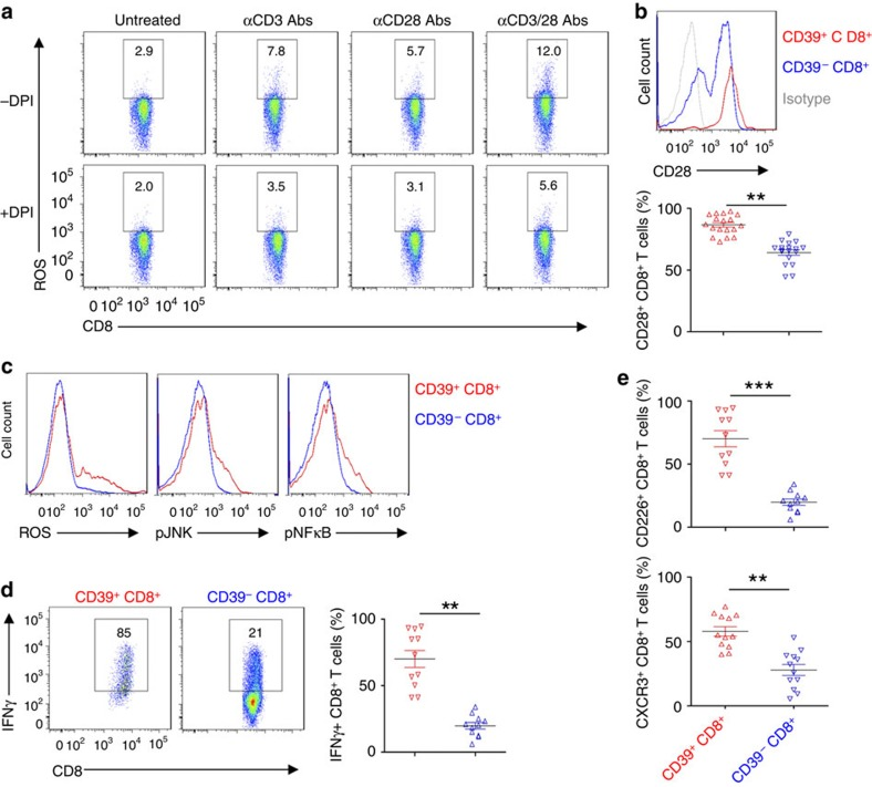 CD39 + CD8 + T cells exhibit Tc1 responsiveness. ( a ) Healthy blood CD8 + T cells were stimulated with anti-CD3 (10 μg ml −1 ) or/and CD28 (5 μg ml −1 ) antibodies in the presence of vehicle or DPI (10 μM), and ROS induction was determined at 30 min. ( b ) Flow cytometric analyses of CD28 expression was done as based on expression of CD39 on CD8 + T cells ( n =18); statistical analysis of percentages of two CD8 + T-cell subsets is shown in lower panel. ( c ) Flow cytometry of ROS induction, phospho-JNK and phospho-NFκB p65 in CD8 + T cells, stimulated with anti-CD3/CD28 antibodies for 30 min. Cells were pretreated with 4 μM of H 2 DCFDA for ROS determination, as before. ( d ) Representative flow cytometric analyses of CD8 + T cells based on expression of CD39. CD8 + T cells were stimulated with anti-CD3/CD28 antibodies for 24 h. Statistical comparative analysis indicating different percentages of CD8 + T cells expressing IFNγ is shown in the right panel. ( e ) Flow analysis of CD226 ( n =11) and CXCR3 ( n =12) expression on CD39 + CD8 + and CD39 − CD8 + T cells. Data are presented as means±s.e.m., ** P