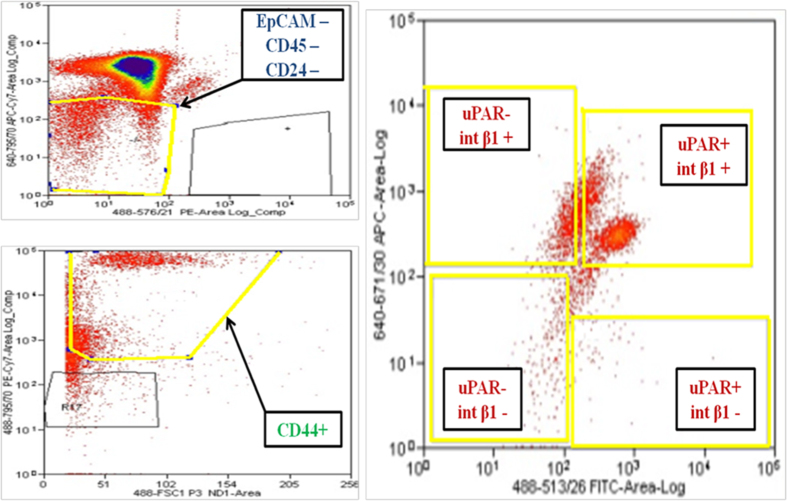 Multiparametric flow cytometry of PBMCs capturing uPAR/int β1 CTC subsets. Breast cancer PBMCs were first sorted applying gating parameters to select for DAPI − (4′, 6-diamidino-2-phenylindole)/EpCAM − /CD45 − /CD44 + /CD24 − cells. Cells were then subsequently sorted to obtain uPAR/int β1 subsets containing combinatorial expression of these markers. Antibodies used for flow cytometry and cell sorting were: anti-human CD45-APC-Cy7 (Biolegend, cat # 304015, 1:50 dilution), mouse anti-human EpCAM-PE CD326 (eBiosciences, cat # 12-9326-71, 1:40 dilution), anti-human CD24-PE ML5 (Biolegend, cat # 311106, 1:20 dilution), anti-human CD44-PE-Cy7 IM7 (Biolegend, cat # 103030, 1:20 dilution), mouse anti-human uPAR (CD87)-FITC (AbD Serotec cat # MCA2506FT, 1:10 dilution), anti-human int β1 (CD29)-ApC TS2/16 (Biolegend, cat # 3030008, 1:50 dilution). Cells were confirmed to be CTCs by performing RT-PCR, immunoflurescence and genotyping arrays. Representative images are shown.