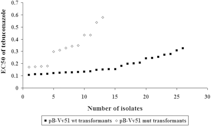 Sensitivity (EC 50 values) of pB-Vv51wt and pB-Vv51mut transformants to tebuconazole. The isolates are separated by the number. The EC 50 values were significant different between pB-Vv51wt and pB-Vv51mut transformants.