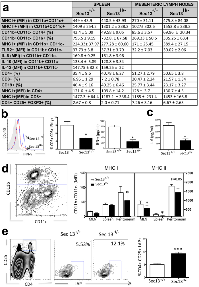 Sec13 H/− Mice Present Specific Immunological Alterations. ( a ) Analysis of immunological cell populations in Sec13 +/+ and Sec13 H/− mice. Cell subsets isolated from spleen and mesenteric lymph nodes (MLN) were analyzed by flow cytometry using CD4+ and CD8+ as phenotypic markers for T lymphocytes, CD19+ for B lymphocytes, and CD11b+CD11c- for macrophages. Results are the mean ± SD (n = 8). Intracellular cytokine production (IL-6, IL-10, and IL-12) was measured by flow cytometry in cultured cells in the presence of ConA and GolgiStop®. ( b – e ) Splenic cells from Sec13 +/+ and Sec13 H/− mice were subjected to flow cytometry to analyze frequencies of specific populations and expression of molecules. Cells were harvested and cultured for 48h in the presence of <t>Con-A.</t> Intracellular cytokine production was measured by flow cytometry in cultured cells in the presence of ConA and GolgiStop®. Cells were also stained with FITC-labeled anti-CD8, PercP-labeled anti-CD3 and PE-labeled anti-IFN-γ. Bar graphs are shown as mean ± SEM. ( b , c ) Cytokine production by splenic cells was measured in the supernatant by sandwich ELISA. Bar graphs are shown as mean ± SEM. ( d ) MHC I and MHC II expression was measured in CD11b+ CD11- cells isolated from mesenteric lymph nodes, spleen, and peritoneum. Graphs are representative of 6 mice/group. ( e ) Cells were stained with FITC-labeled anti-CD4, PercP-labeled anti-CD25, and PE-labeled anti-LAP. CD4+ cells and CD25+ were gated. LAP+ cells were gated within CD4+ CD25+ cells. Plots are representative of the mean of 3 mice/group. All data are representative of three independent experiments. Bar graphs are shown as mean ± SEM. Student T test was applied. *p