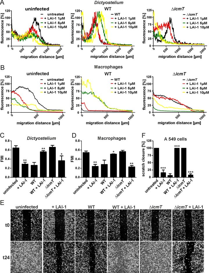 LAI-1 reverses Icm/Dot-dependent inhibition of migration by L . pneumophila . (A) D . discoideum Ax3 amoebae harboring pSW102 (GFP) or (B) RAW 264.7 macrophages were left uninfected or infected (MOI 10, 1 h) with L . pneumophila wild-type or Δ icmT mutant bacteria and treated with different concentrations of LAI-1 (1, 5 and 10 μM) or not. The effect of LAI-1 on migration of amoebae towards folate (1 mM) or macrophages towards CCL5 (100 ng/ml) was monitored in under-agarose assays for 4 hours. Macrophages were stained with Cell Tracker Green BODIPY. Graphs depict the per cent fluorescence intensity versus migration distance. (C) D . discoideum Ax3 amoebae harboring pSW102 (GFP) or (D) RAW 264.7 macrophages were left uninfected or infected (MOI 10, 1 h) with L . pneumophila wild-type or Δ icmT mutant bacteria and treated with LAI-1 (10 μM, 1 h) or not. Single cell migration towards folate (1 mM) or CCL5 (100 ng/ml) was tracked in an under-agarose assay for 15 min or 1 h, respectively. Motility parameters (forward migration index, FMI, and velocity ( S7 Fig )) were analyzed using the ImageJ manual tracker and Ibidi chemotaxis software. (E) Confluent cell layers of A549 epithelial cells were left uninfected or infected (MOI 10, 1 h) with L . pneumophila wild-type or Δ icmT mutant bacteria, treated with LAI-1 (10 μM) or not, scratched and let migrate for 24 h. Prior to imaging (0, 24 h), the detached cells were washed off. (F) The scratch area was quantified at 7 different positions per condition using ImageJ software. Means and standard deviations of triplicate samples per condition are shown, which are representative of 3 independent experiments (C, D, F; means and standard deviations; * p