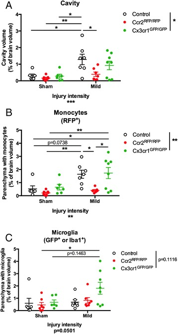 Quantification of cavity volume and inflammatory reaction after TBI. Serial sections were stained for GFP (or Iba1) to visualize microglia or RFP to visualize infiltrating bone marrow-derived monocytes (BMDM). Whole slices, lesion cavity, and area of the slices occupied by monocytes (RFP + cells) or microglia (increased GFP or Iba1 immunoreactivity) were manually outlined to calculate their area; all sections were summed up to calculate volumes. Pathology was quantified as a percentage of the analyzed brain tissue (4 mm total thickness) that contained the lesion cavity ( a ), infiltrating monocytes ( b ), or increased microglial staining ( c ). Statistics: two-way ANOVA and Tukey's post hoc test. Comparisons between groups are shown with horizontal lines ; vertical line in figure legend indicates main effect of genotype. * p