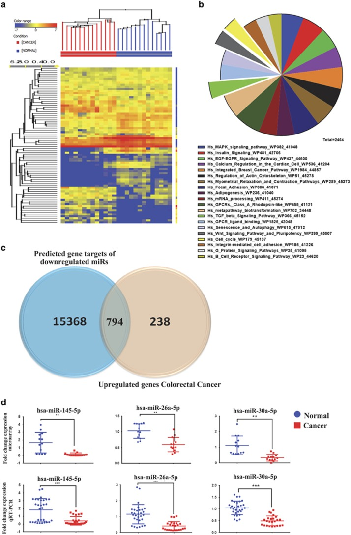 miRNA expression profiling in CRC. ( a ) Hierarchical clustering of 13 colon cancer and 13 normal tissue samples based on miRNA expression levels. Each column represents a sample and each row represents a transcript. Expression level of each miRNA in a single sample is depicted according to the color scale. ( b ) Pie chart illustrating the distribution of the top 20 pathway designations for predicted targets (TargetScan) for the downregulated miRNAs in colon cancer. The pie size corresponds to the number of matched entities. ( c ) Venn diagram depicting the overlap between the predicted gene targets for the downregulated miRNAs (based on TargetScan) versus the differentially upregulated genes in CRC identified in the current study. ( d ) Expression levels of selected miRNAs (hsa-miR-145-5p, hsa-miR-26a-5p, and hsa-miR-30-5p) based on microarray data and validation of those miRNAs using Taqman qRT-PCR (duplicate). ** P