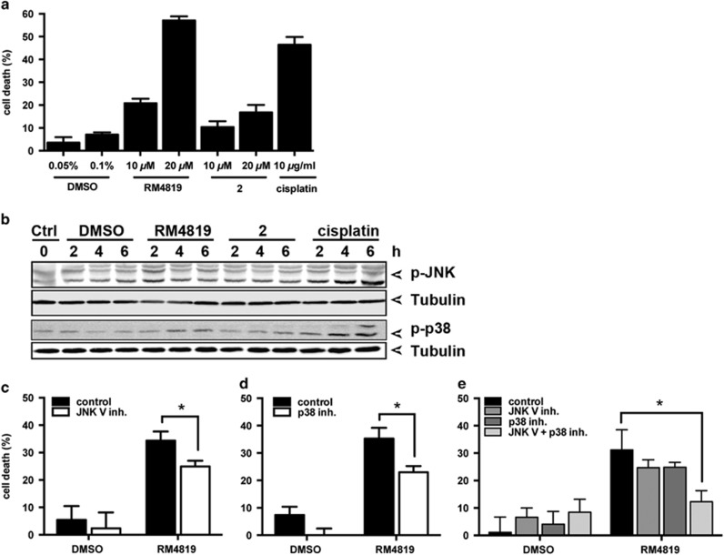 Thiazolide-induced cell death is JNK and p38-dependent. ( a ) Caco-2 cells were treated with indicated concentrations of RM4819, compound 2, cisplatin, or DMSO as solvent control for 40 h. Cell death induction was calculated by an MTT assay. Mean values of triplicates±S.D. of a representative experiment are shown ( n > 3). ( b ) Caco-2 cells were control treated (ctrl), or with thiazolides (20 μ M), cisplatin (10 μ g/ml), or DMSO (0.1%) for indicated time intervals. Phospho-JNK (p-JNK), phospho-p38 (p-p38), and tubulin as a loading control were detected by western blotting. ( c–e) Caco-2 cells were pretreated with JNK V inhibitor (2.5 μ M) ( c ), p38 inhibitor (10 μ M), ( d ) or the combination of both ( e ) 1 h before stimulation with 20 μ M RM4819 for further 40 h. Cell death induction was assessed by an MTT assay. Mean values of triplicates±S.D. of a representative experiment are shown ( n > 3). * P