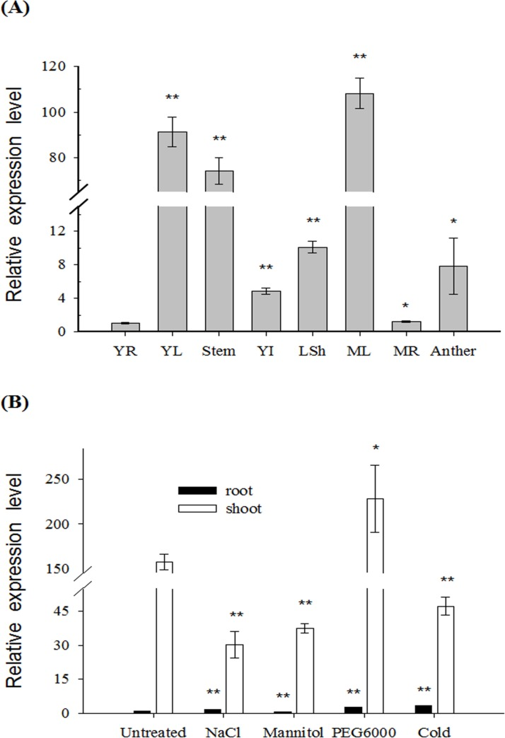 Expression analysis of HbFd1 in H . brevisubulatum by real-time PCR. (A) Expression pattern of HbFd1 from different tissues of H . brevisubulatum . YR, young root; YL, young leaf; steam; YI, young inflorescence; LSh, leaf sheath; ML, mature leaf; MR, mature root and anther. (B) Expression pattern of HbFd1 in H . brevisubulatum under 350 mM NaCl, 350 mM mannitol and 10% PEG6000 stressed for 6 hrs, and 4°C for 12 hrs, respectively. All assays were performed in triplicate. Significant differences were determined relative to each control using a student's t-test [ P -values
